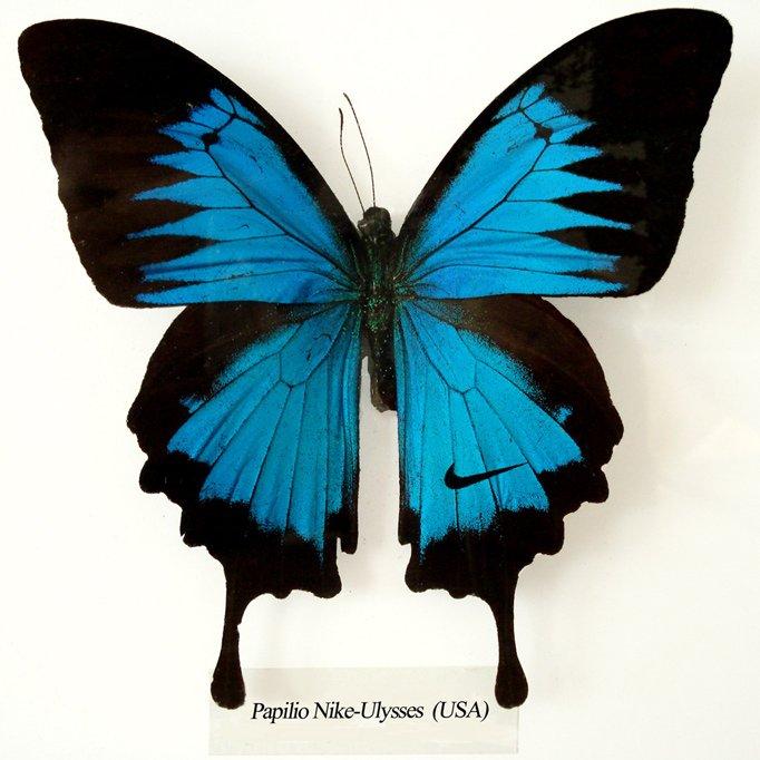 Papilio_Nike_Ulysses_(Koert_van_Mensvoort)_682x682